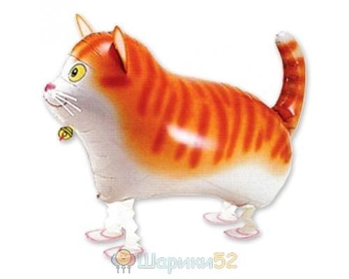 Шарик ходячий Кот